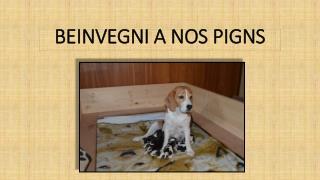BEINVEGNI A NOS PIGNS