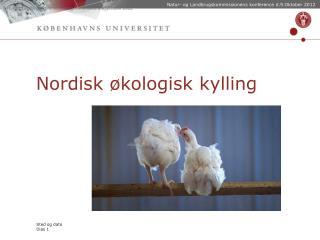Nordisk økologisk kylling