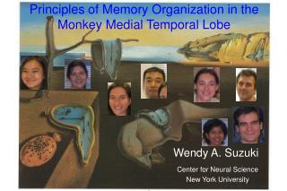 Principles of Memory Organization in the  Monkey Medial Temporal Lobe