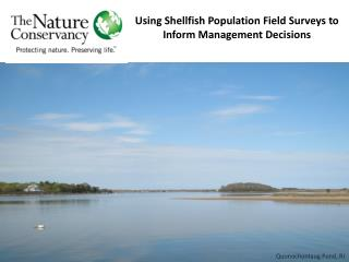 Using Shellfish Population Field Surveys to Inform Management Decisions