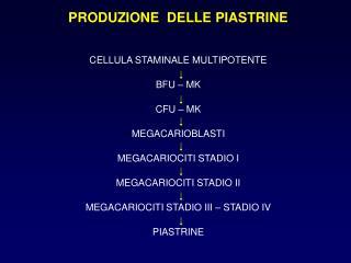 PRODUZIONE  DELLE PIASTRINE   CELLULA STAMINALE MULTIPOTENTE  BFU   MK  CFU   MK  MEGACARIOBLASTI  MEGACARIOCITI STADIO