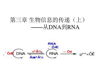 ??? ?????????? �� ? DNA ? RNA