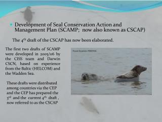 Development of Seal  Conservation Action and Management Plan (SCAMP;  now also known as CSCAP)