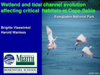 Wetland and  tidal  channel evolution  affecting critical  habitats at Cape Sable