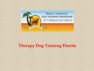 Therapy Dog Training Florida