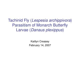 Tachinid Fly Lespesia archippivora Parasitism of Monarch Butterfly Larvae Danaus plexippus