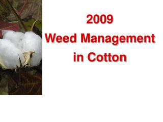 2009 Weed Management in Cotton