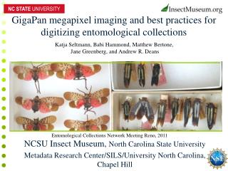 GigaPan megapixel imaging and best practices for digitizing entomological collections