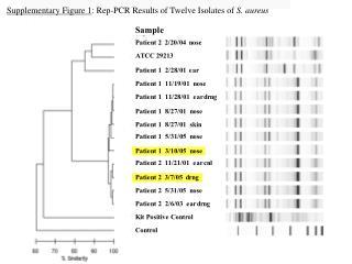 Supplementary Figure 1 : Rep-PCR Results of Twelve Isolates of  S. aureus