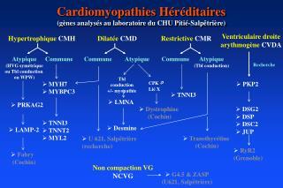 Cardiomyopathies Héréditaires  (gènes analysés au laboratoire du CHU Pitié-Salpêtrière)