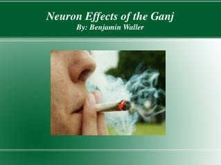 Neuron Effects of the Ganj By: Benjamin Waller