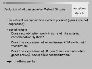 no natural recombination system present (genes are not   expressed)  our attempts: