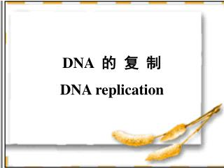 DNA   的  复  制 DNA replication