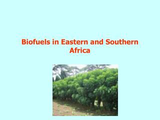Biofuels in Eastern and Southern Africa