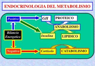ENDOCRINOLOGIA DEL METABOLISMO