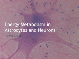Energy Metabolism in  Astrocytes and Neurons