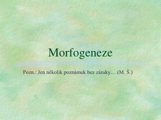 Morfogeneze