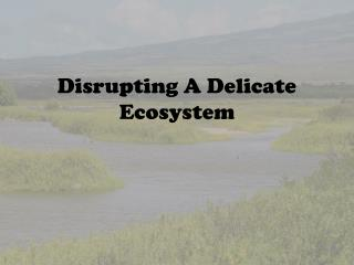 Disrupting A Delicate Ecosystem