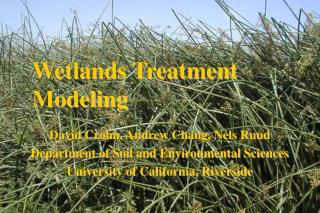 Wetlands Treatment Modeling