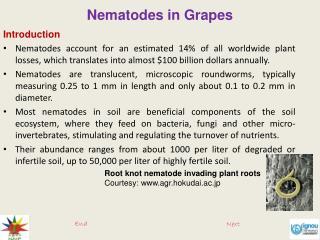 Nematodes in Grapes