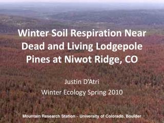 Winter Soil Respiration Near Dead and Living Lodgepole Pines at Niwot Ridge, CO