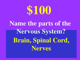 Brain, Spinal Cord,  Nerves