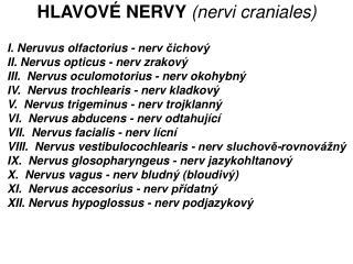 I.Neruvus olfactorius - nerv čichový  II. Nervus opticus - nerv zrakový