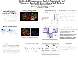 Biosynthesis of 6-deoxyerthronolide