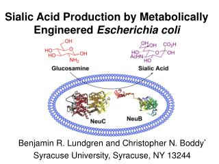 Sialic Acid Production by Metabolically Engineered  Escherichia coli