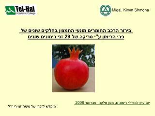 Migal, Kiryat Shmona