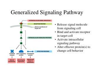 Generalized Signaling Pathway