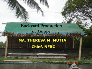Backyard Production  of Guppy