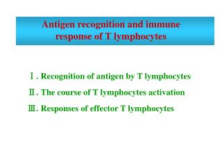 Antigen recognition and immune response of T lymphocytes