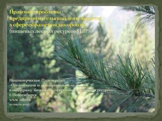 Нормы права, регулирующие лесные отношения в области оборота дикоросов