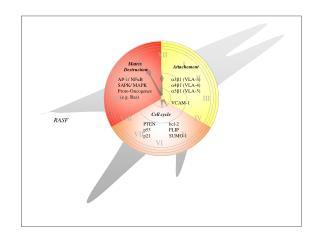 AP-1/ NF k B SAPK/ MAPK Proto-Oncogenes    (e.g. Ras)