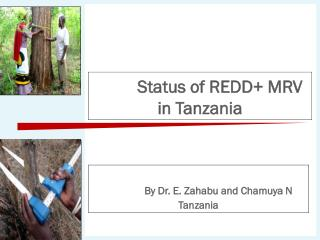 Status of REDD+ MRV in Tanzania