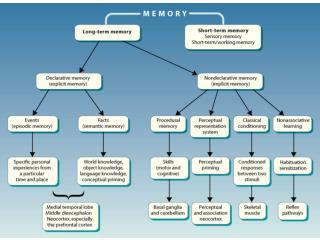 Severe anterograde amnesia  temporally graded retrograde amnesia