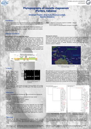 Phylogeography of  Leucetta chagosensis (Porifera, Calcarea)
