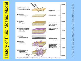 History of Fluid Mosaic Model