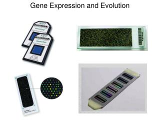 Gene Expression and Evolution