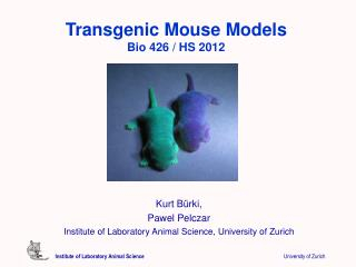 Transgenic Mouse Models Bio 426 / HS 2012
