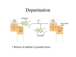 Depurination