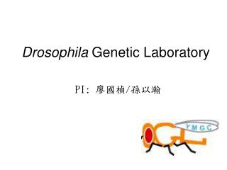 Drosophila  Genetic Laboratory