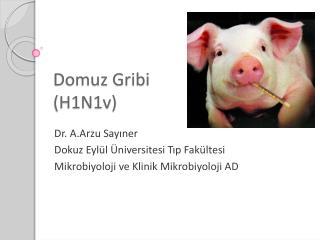 Domuz Gribi  (H1N1v)