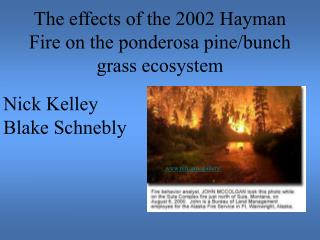 The effects of the 2002 Hayman Fire on the ponderosa pine/bunch grass ecosystem