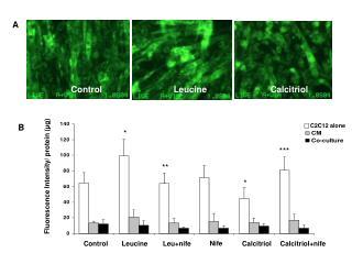 Fluorescence Intensity/ protein ( μ g)