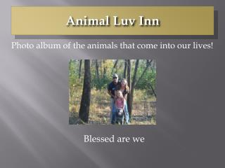 Animal Luv Inn