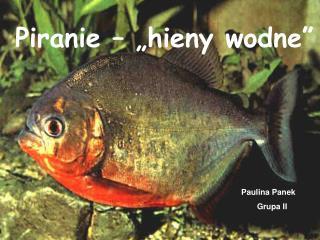 """Piranie – """"hieny wodne"""""""