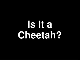 Is It a Cheetah?