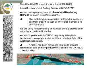 About the HIMOM project (running from 2002-2005) Jacco Kromkamp and Rodney Forster at NIOO-CEME